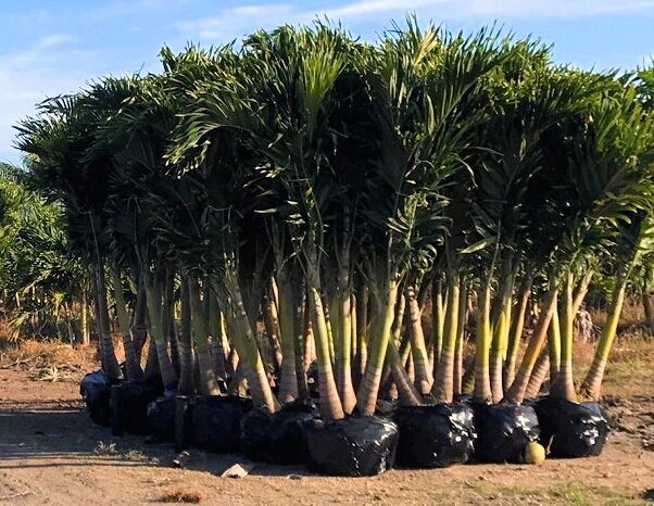 plants wholesale growers