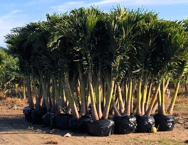 plants wholesale growers