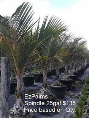slide-Ez_Spindle_Palm